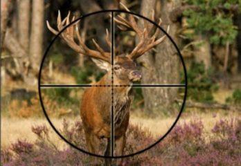 elk hunting scope