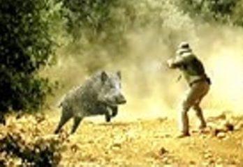 hog call hunting